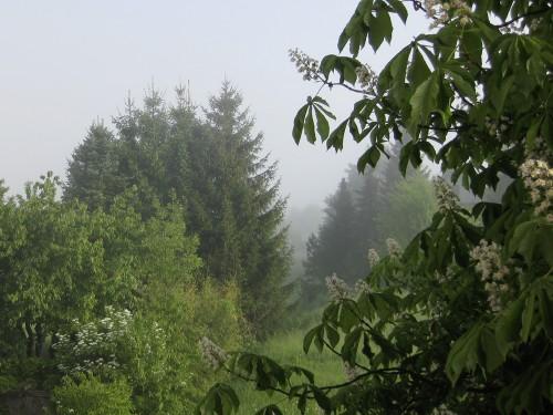 Nebel im Norden