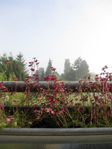 Blumenkästen mit Nebel im Hintergrund