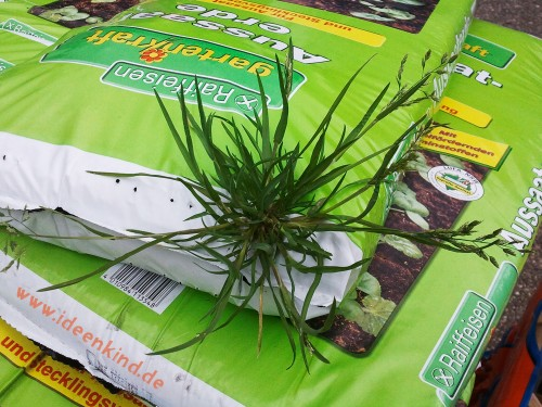 Gras auf Erdsack