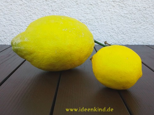 Riesen-Zitrone